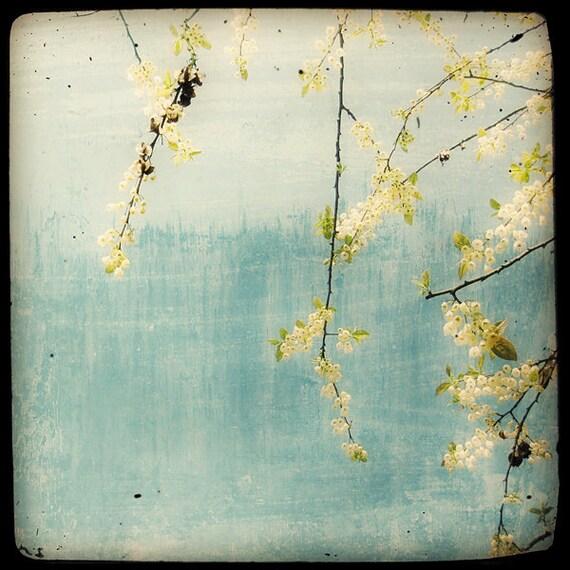 Printemps sur fond bleu - Fine Art Print - Nature Photography - Blue Yellow White TTV - Say It With Flowers - TFTeam