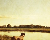 """Boxer Dog by the Pond on a Summer Afternoon - """"As the day fades..."""" - 8x10 Color Animal Photo Print"""