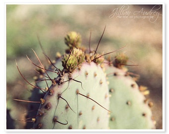 Cactus Photography, Rustic Southwest Home Decor, Macro Photography, Nature Photography, Texas Arizona Wall Art, Purple and Green, Plant