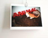 Cat art print animal red letters ginger tom 10 x 8 colour photograph vintage signage Typescale home decor