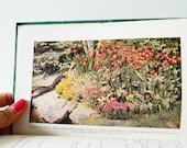 1950s Vintage Gardening Handbook / Color Photos and Illustrations / Mid Century Garden Book / Collectible Botanical Book