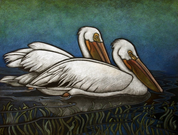 American White Pelicans (Special Concern), Water Celery