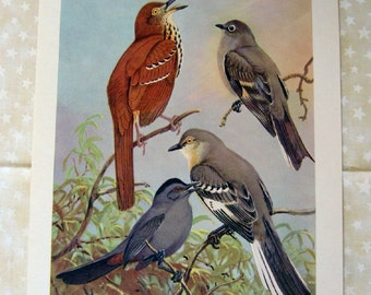 Vintage Bird Prints 3 Pieces