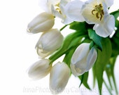 Fine art photography White dreamy tulips home decoration mothers day gift , tbteam, oht, rusteam