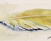 Watercolor Nature Art Illustration Natural History Hawk Tail Feather
