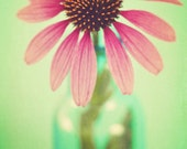 The Coneflowers II - 8 x 12 Fine Art Photograph
