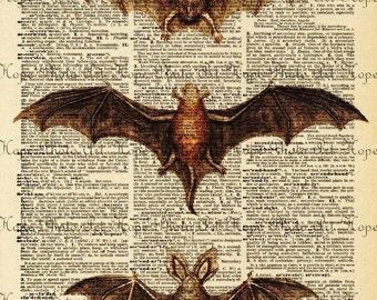 Vintage Bats Dictionary Halloween Digital Collage Sheet dictionary burlap feed sacks image transfer tote bags canvas pillows UPrint 300jpg