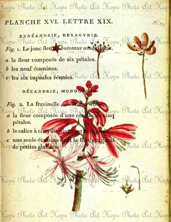 Red Botanical French Description Digital Collage Sheet Image Transfer Burlap Feed Sacks Pillows Tea Towels greeting cards UPrint 300dpi