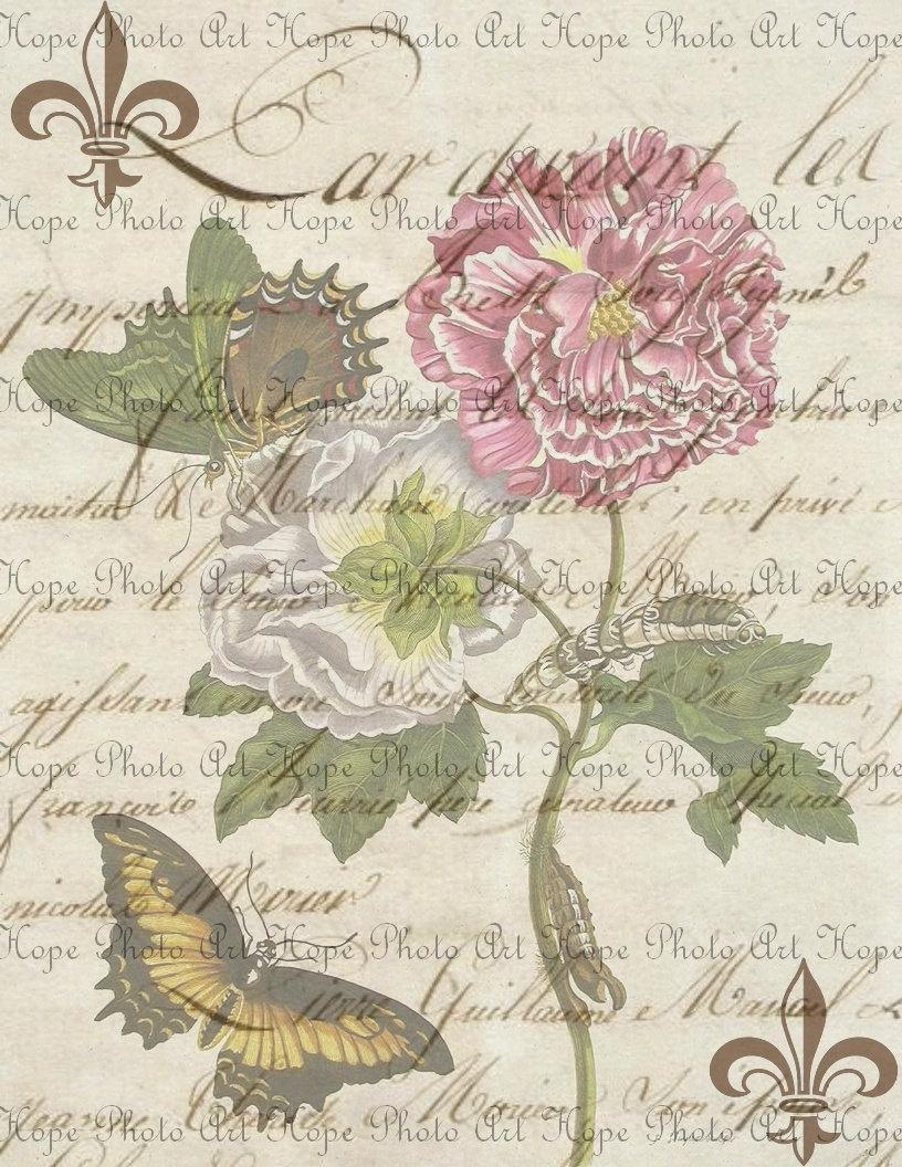 french script le fleur pink butterfly digital collage sheet