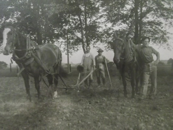 Antique Cabinet Photo of Farming Men Plowing with Horses - 1800's