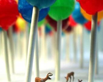 Lollipop Forest- 5x7 Metallic Print