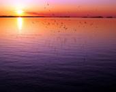 Flight - Sunset Sunrise Photography Purple Pink Orange Yellow Lake Murray Water Nautical Fine Art Metallic Print - 8x10 Photograph