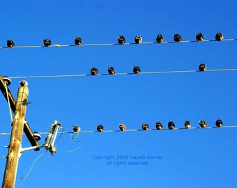 Bombs Away - Sky Blue Pigeons Birds Photography Telephone Line Wire Fine Art Lustre Print - 8x10 Photograph