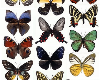 Butterfly - Special Edition - A4 Digital Collage Sheet - For unlimited number of prints - Set1