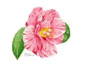 Peppermint Camellia Watercolor Print 8x10