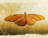 Created for the Academy Awards - Oscars - Celebrity Gift Lounge, Fine Art Photograph, Orange Butterfly, 4x6 print, under twenty 20