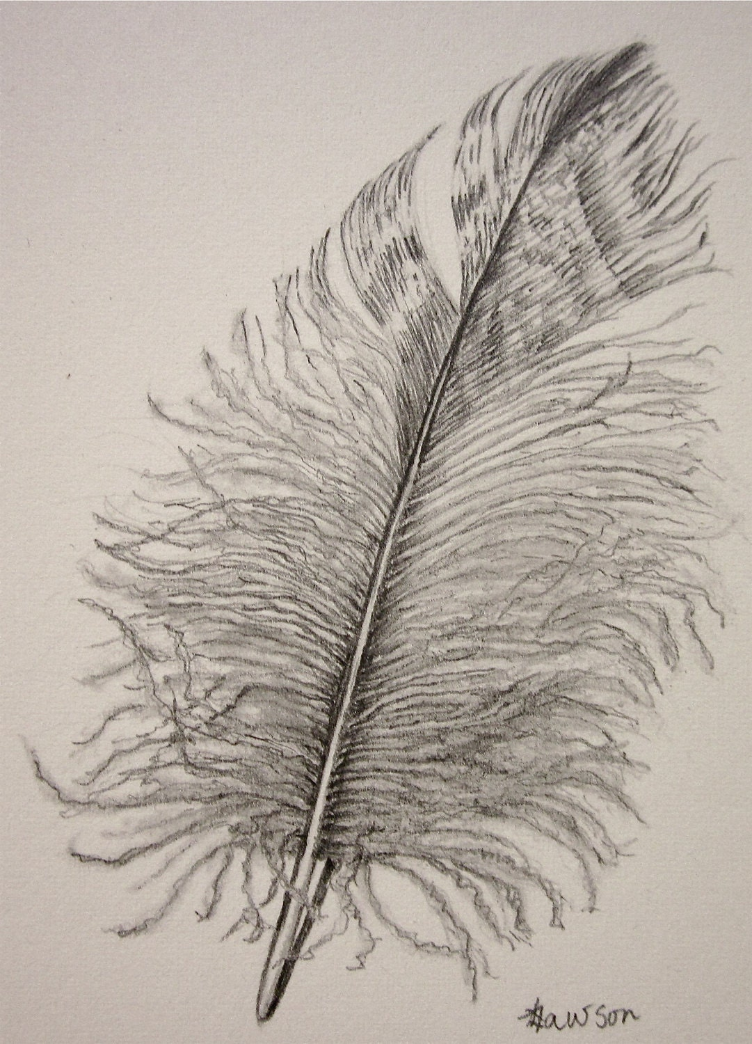 Soft Downy Feather Original Pencil Drawing