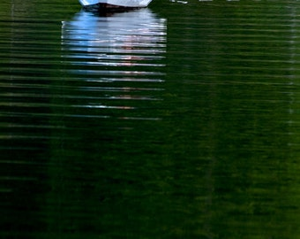 Fine Art Photograph - White & Red Dinghy