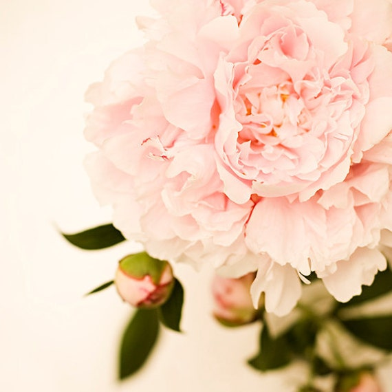 flower photography flower photograph light pink peony nursery decor