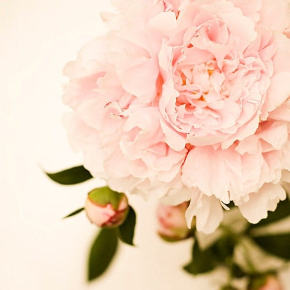 Flower photography flower photograph light pink by ...