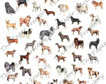 Dog Breeds 1 Digital Collage Sheet A BIG Bunch Of Bow-Wows
