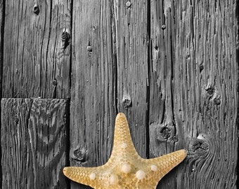 Starfish hanging on Black and White wood board. Fine Art Photography.