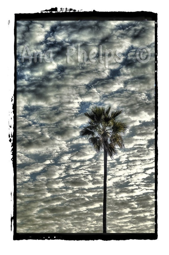 Palm tree against clouds. Fine Art Photography.