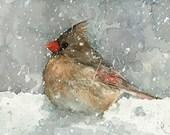 Cardinal Watercolor Art Print, Bird in snow painting