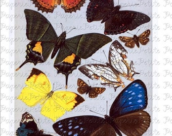 Butterfly Digital Download Collage Sheet