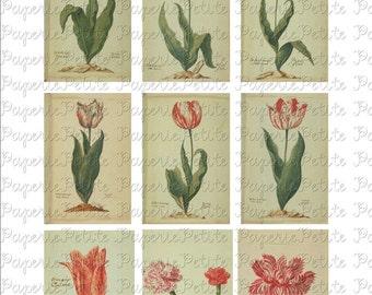 Tulip Digital Download Collage Sheet C