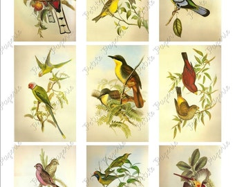 Colorful Birds Digital Download Collage Sheet 3.5 x 2.25 Inch
