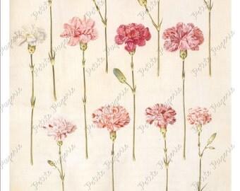 Pink Flower Carnation Digital Download Collage Sheet