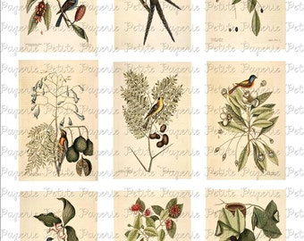 Vintage Birds Digital Download Collage Sheet D 3.5 x 2.25