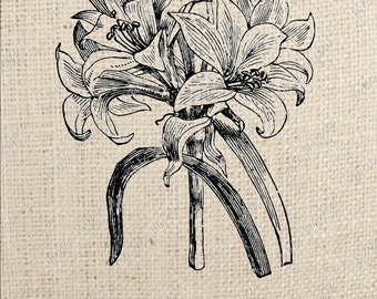 Lily Flower Digital Download for Iron on Transfer