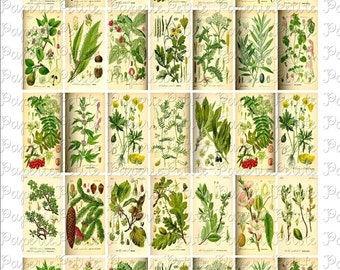 Floral and Leaf Botanical Digital Download Collage Sheet 1 x 2 inch
