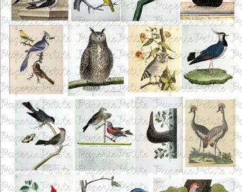 Vintage Birds Digital Download Collage Sheet B