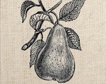 French Pear Digital Download Iron on Transfer