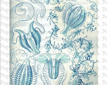 Haeckel Blue Sea Life Digital Download Collage Sheet C