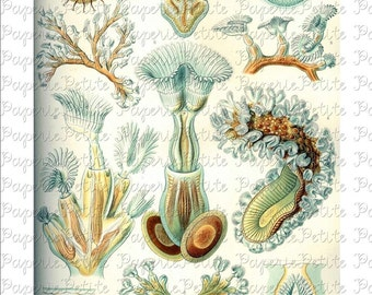 Haeckel Sea Life Digital Download Collage Sheet B