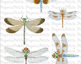 Dragonfly Digital Download Collage Sheet A