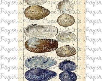 Clam Shells Digital Download Collage Sheet B