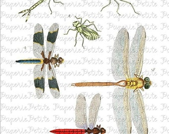 Dragonfly Digital Download Collage Sheet B