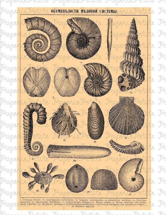 Shells Digital Download Collage Sheet  F