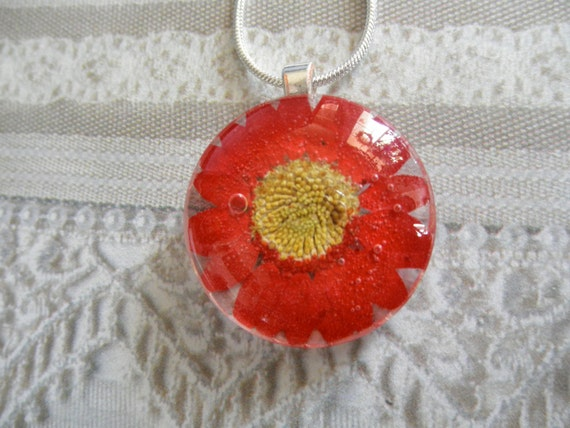 Passion Red Daisy Pressed Flower Small Round Glass Pendant-Symbolizes Loyal Love-April's Birth Flower-Nature's Wearable Art-Gifts 25 & Under