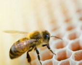 Sweet Nectar, Bee, Save The Bees, Bee Hive, Nature Photography, Honey Comb, Nursery, Home/Office Art