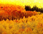 Blazing Mountainside Forest Aspens Trees Autumn Colorado Red Orange Golden Fall Leaves Rustic Cabin Lodge Photograph