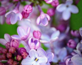 Lavender Petals Lilacs Delicate Spring Floral Bloom Blue Flower Rustic Cabin Lodge Photograph