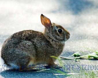 Rabbit nature animal photograph - fine art photography print - bunny photo - children room wall art - nursery decor