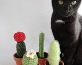 Crochet Cactus Amigurumi Plant Set of Four