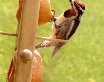 Double Fruit or Suet Feeder
